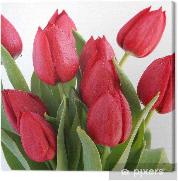 Leinwandbild Rote Tulpen auf weißem Hintergrund - Themen
