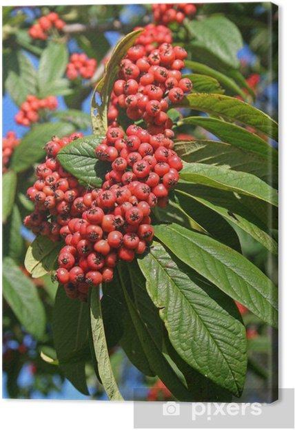 Beliebt Bevorzugt Leinwandbild Roten Beeren am Baum • Pixers® - Wir leben, um zu &KU_71