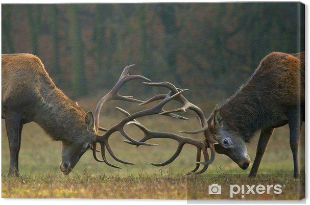 Leinwandbild Rothirsch Kampf - Tiere