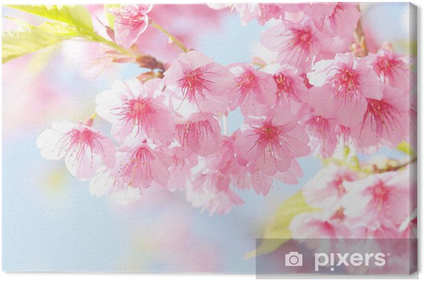 Leinwandbild Sakura Blume - Themen