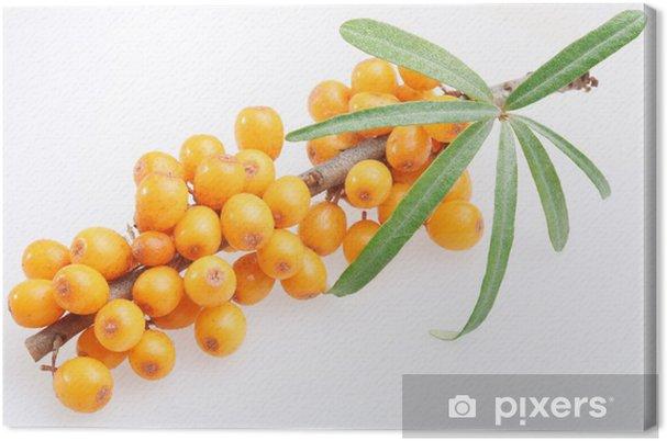 Leinwandbild Sanddorn auf einem weißen Hintergrund - Früchte