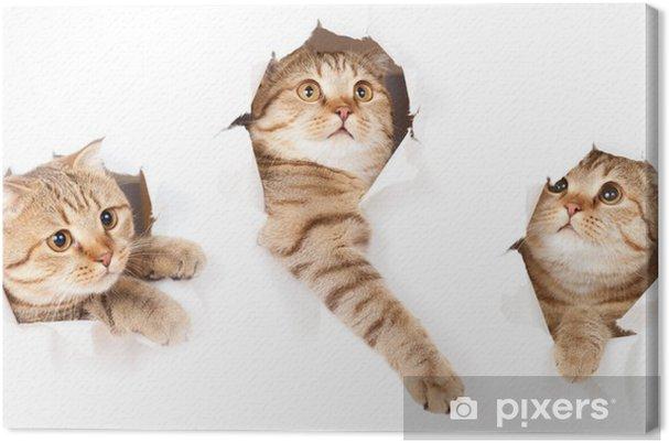 Leinwandbild Satz von einer Katze in Papierseite zerrissenen Loch isoliert - Themen
