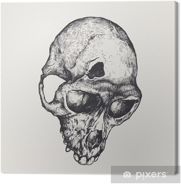 Leinwandbild Schädelbruch Affen. Vektor-Illustration - Texturen