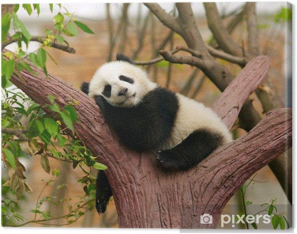 Leinwandbild Schlafender Riese Panda-Baby - Pandas