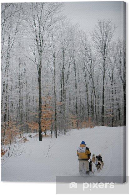Leinwandbild Schlittenrennen, UP 200, marquette michigan Hunderennen - Säugetiere