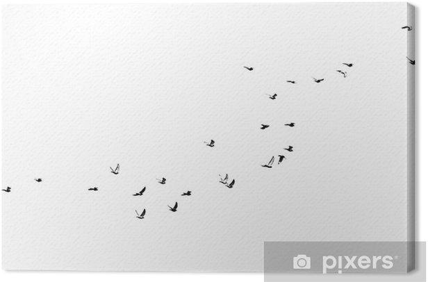 Leinwandbild Schwarm Vögel auf einem weißen Hintergrund - Hintergründe