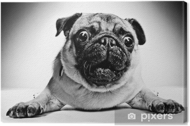 Leinwandbild Schwarz-Weiß-Porträt eines Mops - Mops