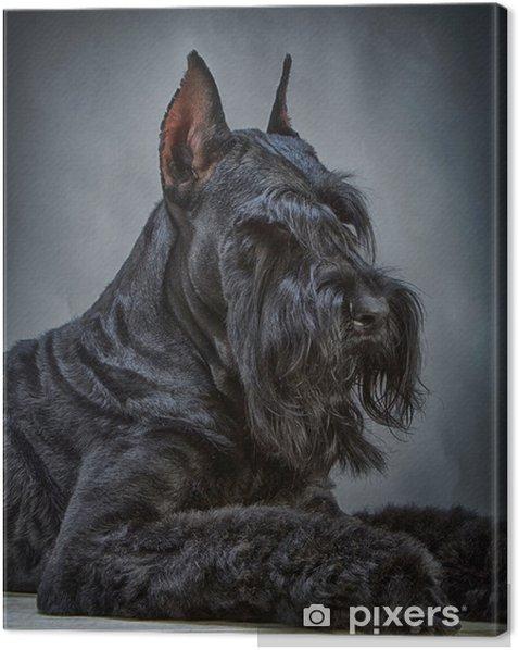 Leinwandbild Schwarze Riesenschnauzer Hund - Säugetiere