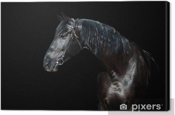 Leinwandbild Schwarzes Pferd auf schwarzem Hintergrund isoliert - Hintergründe