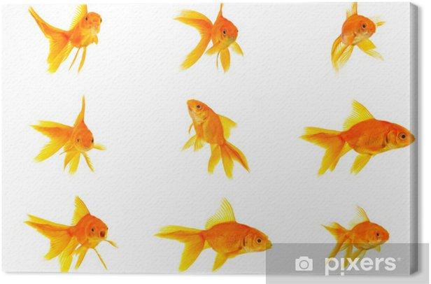 Leinwandbild Set von Goldfischen - Unterwasserwelt