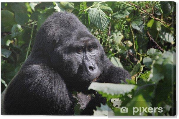 b70bece1e714c Leinwandbild Silverback Gorilla-Uganda • Pixers® - Wir leben