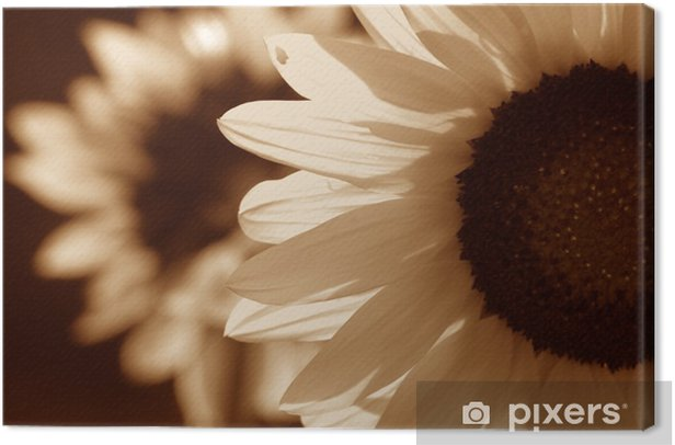 Leinwandbild Sonnenblume in Sepia-Ton - Themen