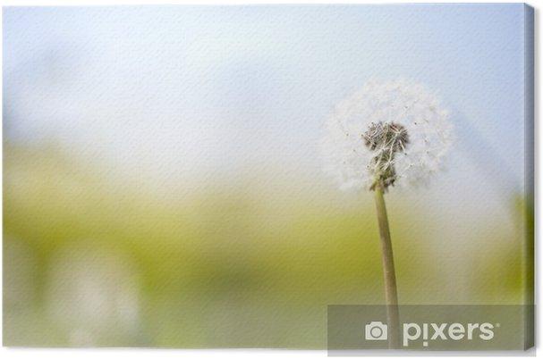 Leinwandbild Sonnenblume Pusteblume - Themen