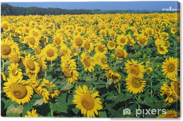 Leinwandbild Sonnenblumen - Themen