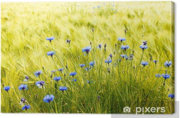 Leinwandbild Sonniges Getreidefeld mit Kornblumen - Landwirtschaft