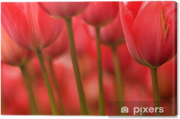 Leinwandbild Stängel und Blüten - Themen