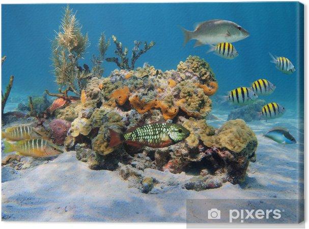 Leinwandbild Steinkorallen im Meer - Fische