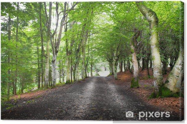 Leinwandbild Strada nel bosco - Wälder