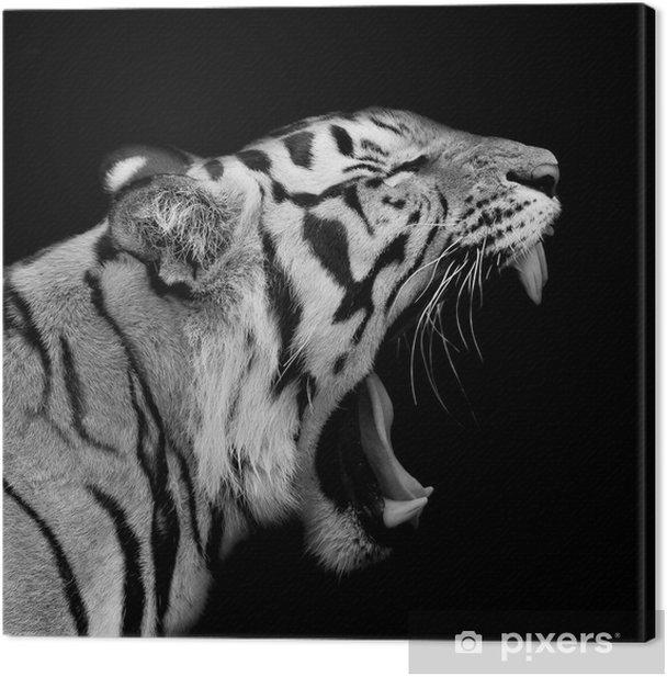 Leinwandbild Sumatra Tiger Roaring - Bereich