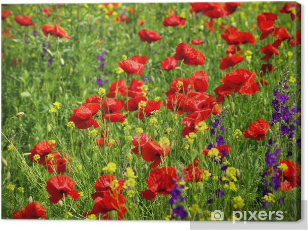 Leinwandbild Summer wildflowers - Landwirtschaft