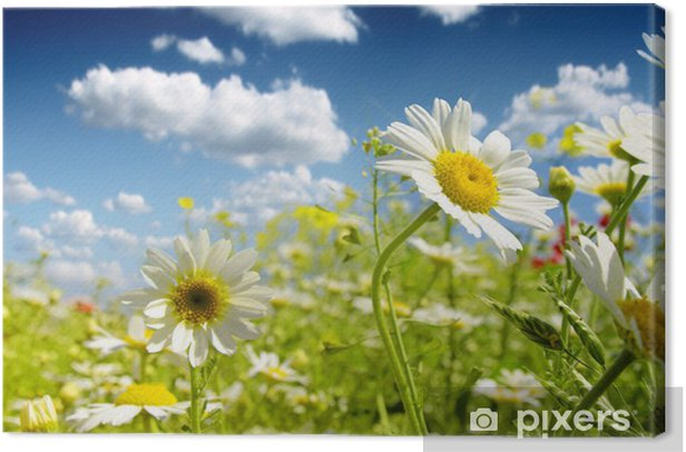 Leinwandbild Summer wildflowers - Blumen