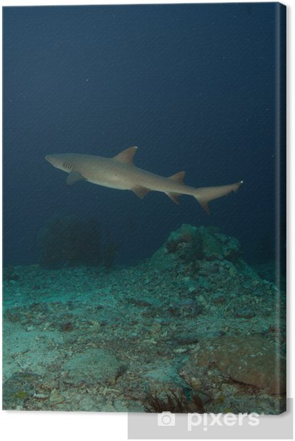 Leinwandbild Tiburon - Unterwasser