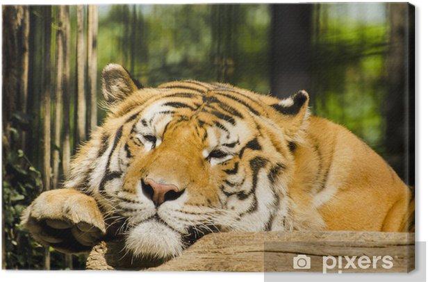 Leinwandbild Tiger - Themen