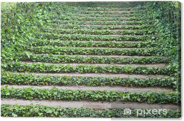 Leinwandbild Treppen mit Efeu - Private Gebäude
