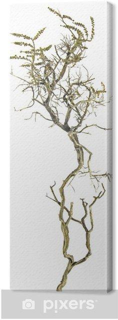 Leinwandbild Trockene Zweig - Bäume