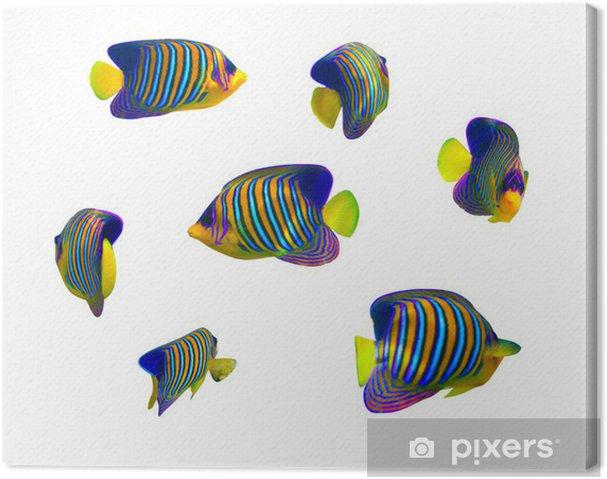 Leinwandbild Tropische Fische Auflistung auf weißem Hintergrund - Unterwasserwelt