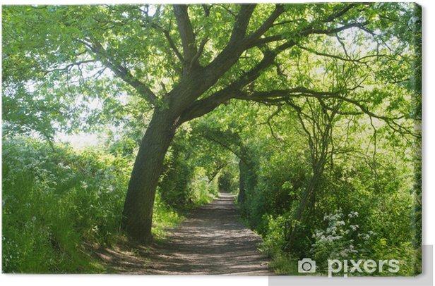 Leinwandbild Tunneled Weg durch die Bäume - Natur und Wildnis