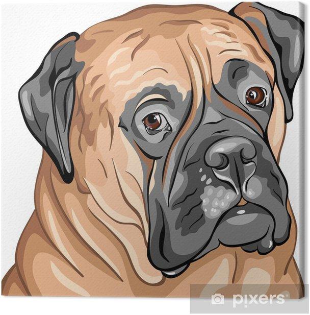 Leinwandbild Vektor Nahaufnahme Porträt der Hundezucht Bullmastiff - Wandtattoo