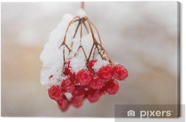 Leinwandbild Viburnum im Schnee - Pflanzen
