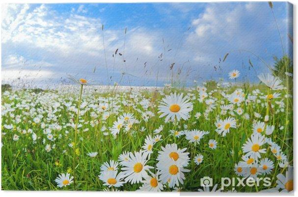Leinwandbild Viele Kamillenblüten über blauen Himmel - Themen