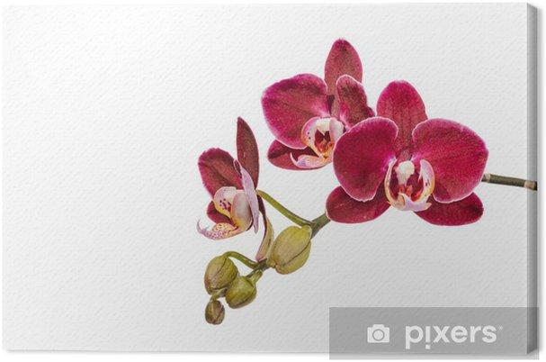 Leinwandbild Violetten Orchideen - Blumen