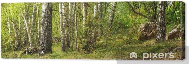 Leinwandbild Wald mit Birken - Themen