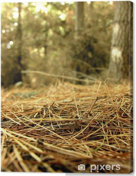Leinwandbild Waldboden - Bäume