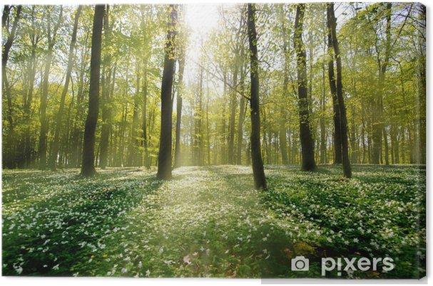 Leinwandbild Waldlichtung Im Gegenlicht Pixers Wir Leben Um Zu