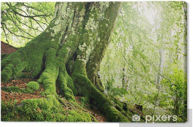 Leinwandbild Waldweg - Wälder