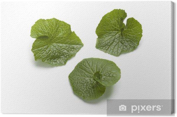 Leinwandbild Wasabi Blätter - Asien