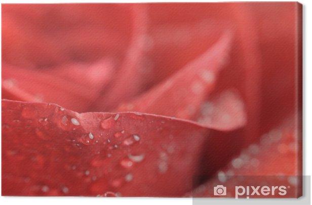 Leinwandbild Wasser-Tropfen auf schöne rote Rose Close-up - Blumen