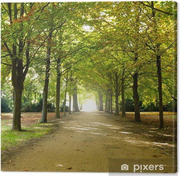 Leinwandbild Weg im park - Themen