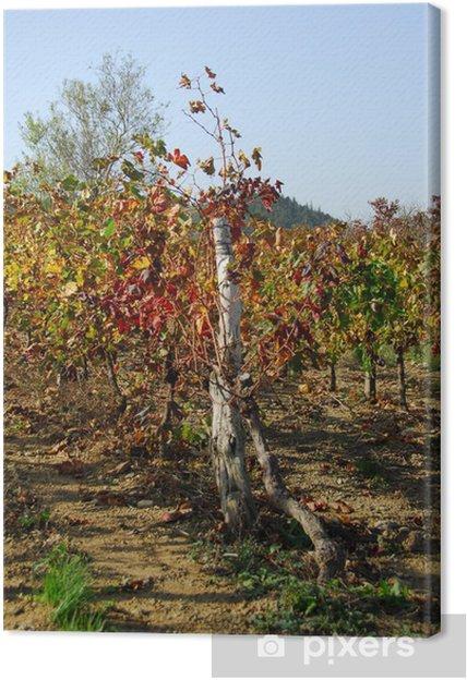 Leinwandbild Weinbergs Ardèche - Pflanzen