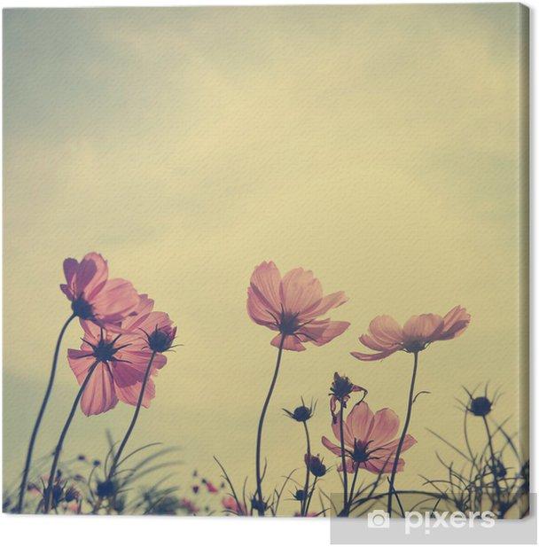 Leinwandbild Weinlese-Blumen Cosmos in Sonnenuntergang - Stile
