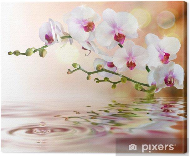 Leinwandbild Weiße Orchideen auf dem Wasser mit Tropfen -