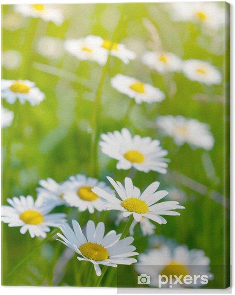 Leinwandbild Weiße und gelbe Margeriten - Jahreszeiten