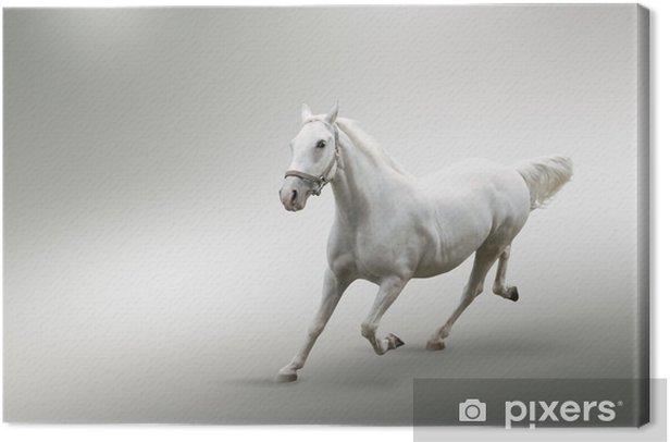 Leinwandbild Weißes Pferd - Säugetiere