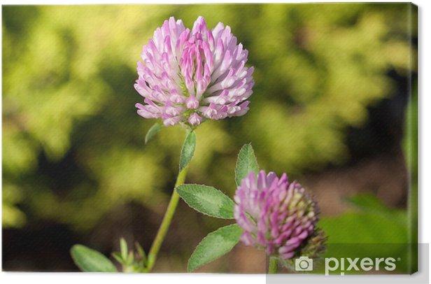 Leinwandbild Wiese close-up - Blumen