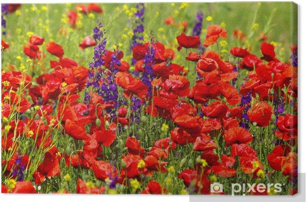Leinwandbild Wild Sage und Mohn - Blumen