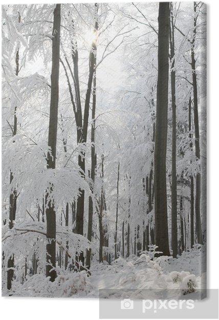 Leinwandbild Winter-Gesamtstruktur mit Bäumen in Frost von der Morgensonne beleuchtet - Bäume